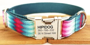Top 10 Best Dog Collars in 2018