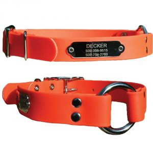 6. GoTags, Sporting Dog Collar with Stainless Steel Personalized Nameplate